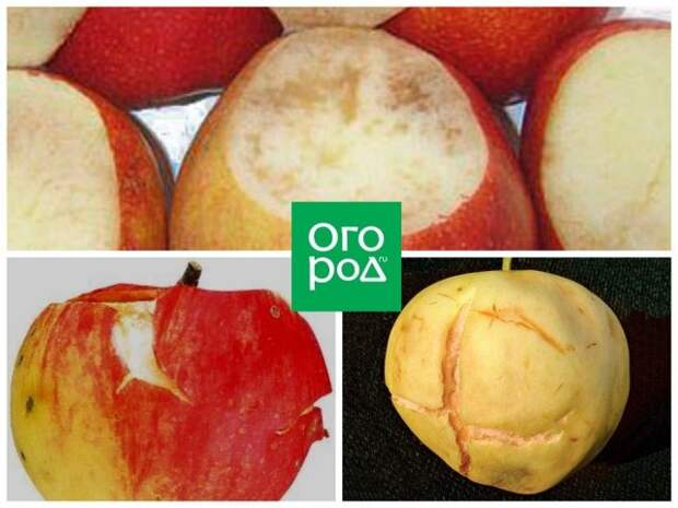 Пухлость яблок