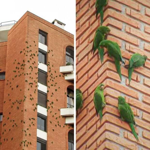 Почему попугаи много лет грызут это кирпичное здание вБразилии