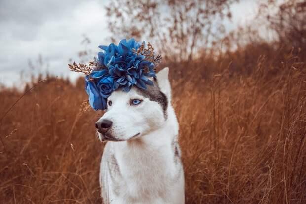 9. То, что делает меня другим, и есть то, что меня делает жизненная позиция, жизнеутверждающие, канада, собаки, философия жизни, фото собак, фотограф, хаски
