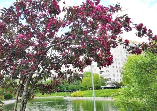 Фото дня: яблони на пруду