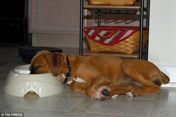 Когда пить хочется даже во сне животные, мило, собаки, фото