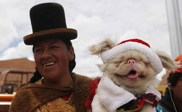 Как выглядит мир перед Новым годом и Рождеством