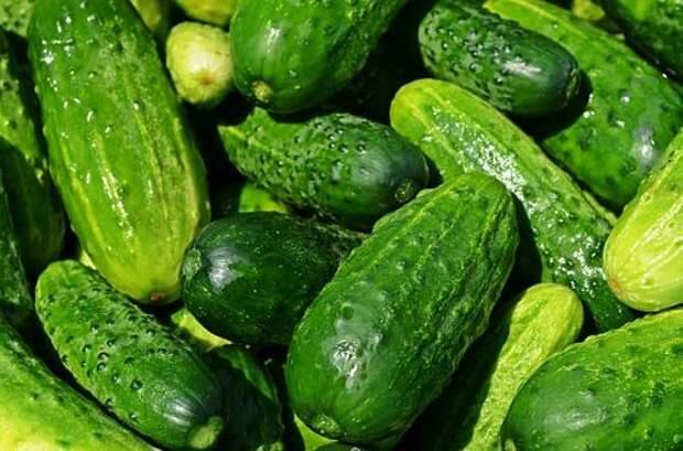 5 эффективных и простых методов увеличить урожай огурцов