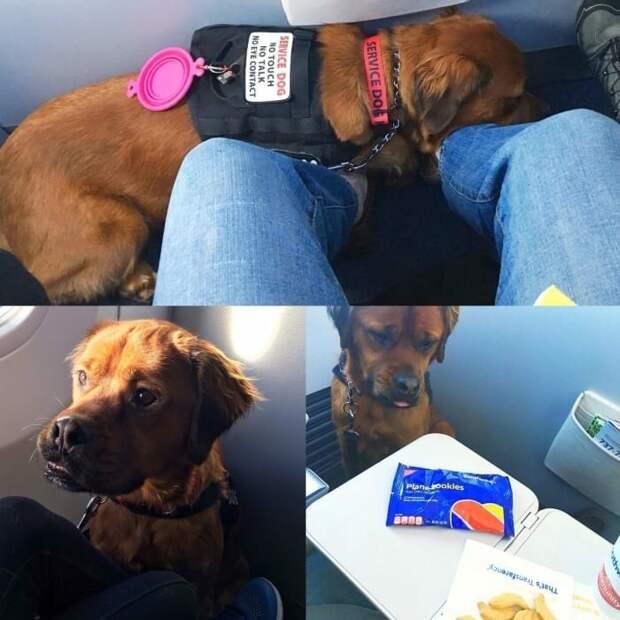 7. Постоянно что-то просят животные, пассажир, салон, самолет, собака, фотография