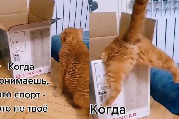 Кот неудачно запрыгнул в коробку и заставил соцсети хохотать