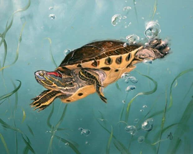 Животные дикого мира художника Mark Kelso