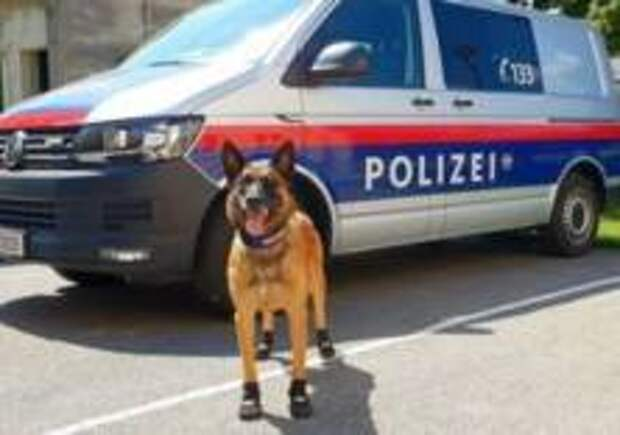 Полицейским собакам в Вене выдали ботинки