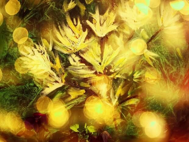 Кто ты, Цветок Папоротника?