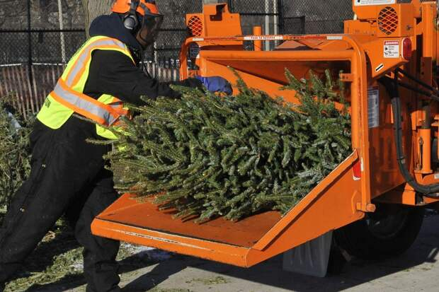 В Подмосковье откроют свыше 200 пунктов приема елок на переработку