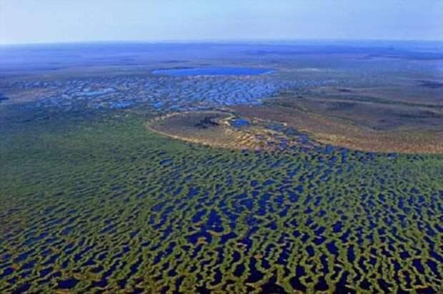 Как самые крупные в мире Васюганские болота улучшили жизнь сибиряков (4 фото + видео)