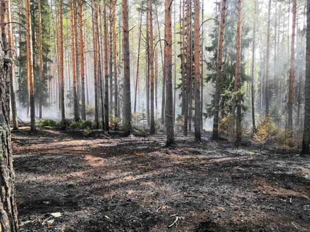 Молния могла стать причиной пожара на территории Кезского лесничества в Удмуртии