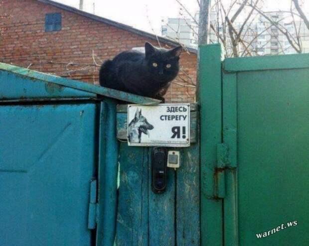 Кошки на заборе забор, кошки, фото