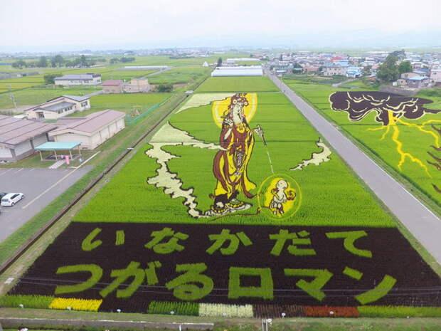 landart03 Необыкновенные картины на рисовых полях