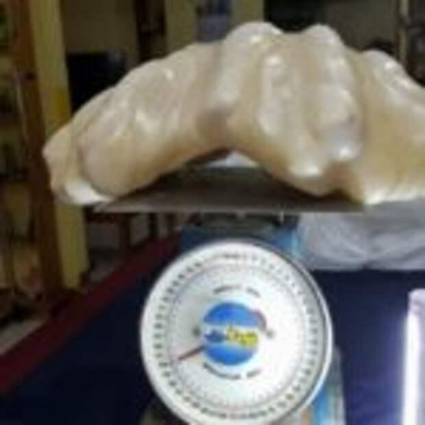 Рыбак нашел 34-килограммовую жемчужину стоимостью 100 миллионов долларов