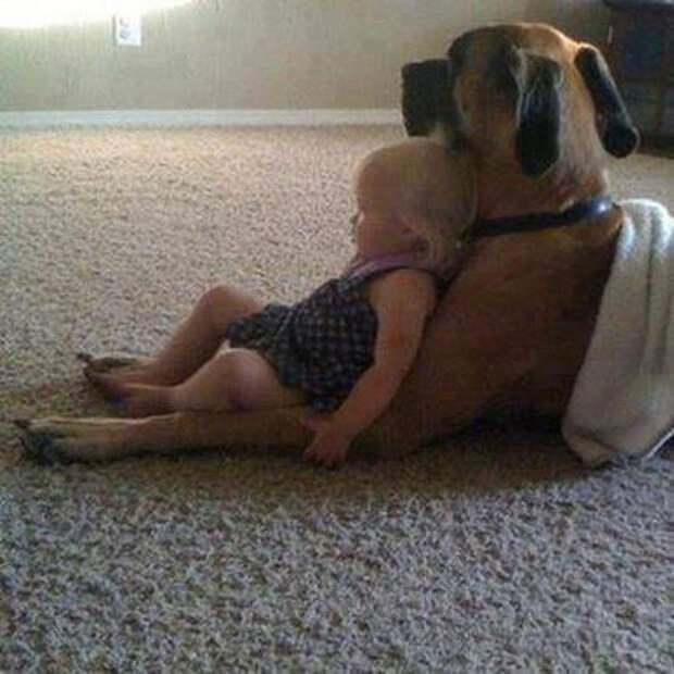 дети должны расти с домашними животными (10)