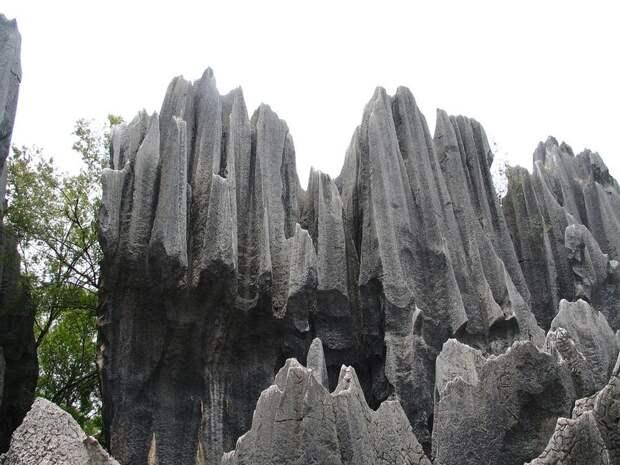 kamenniles 3 Чудеса света: каменный лес Шилинь в Китае
