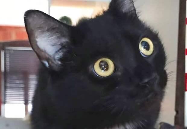 Сидевшая у порога голодная кошка искала пристанище и еду, но совсем не для себя