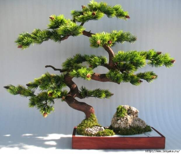 3925073_bonsai2_1_ (700x599, 215Kb)