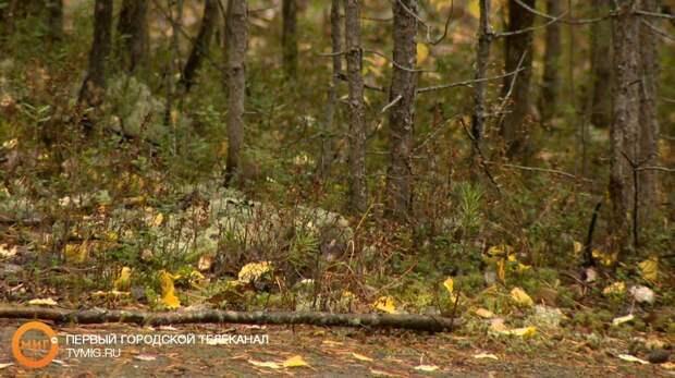 В лесу под Ноябрьском погиб охотник