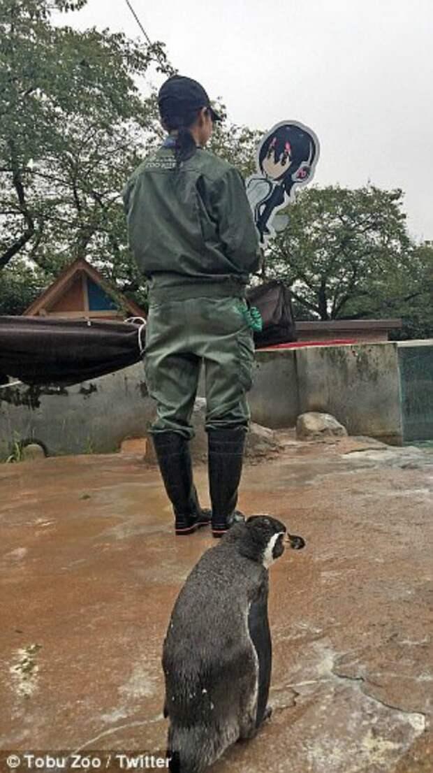 """""""Вернись ко мне, я всё прощу!"""" Пингвина бросила возлюбленная, а вторая и вовсе… оказалась картонной!"""