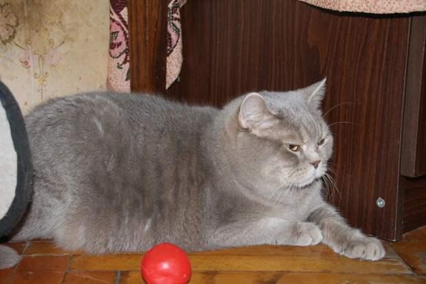 Сколько брошенной кошке придётся скитаться, чтобы обрести настоящих хозяев?!! Помогите, пожалуйста!