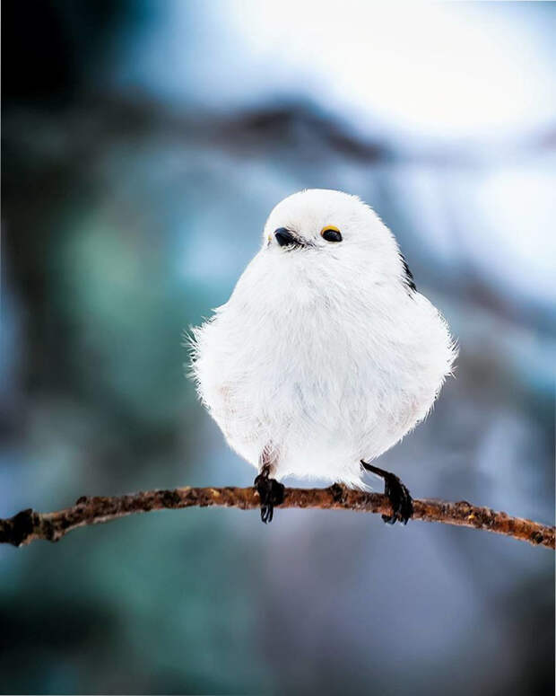 как выглядят птички Angry Birds в реальной жизни 11