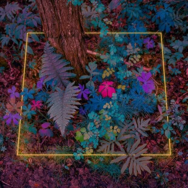 10 кайфовых фото леса, в который прифотошопили неон