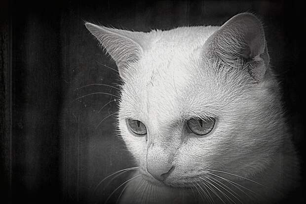 Дворовая кошка жила в подвале, но умудрялась оставаться белоснежной. Жильцы дома восхищались, а взять её домой решился лишь один