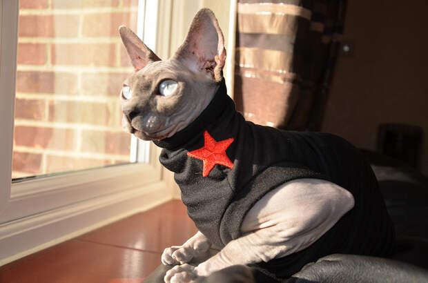 Посвящается всем, кто взял или хочет взять отказных животных забавные животные, кот сфинкс, смешное