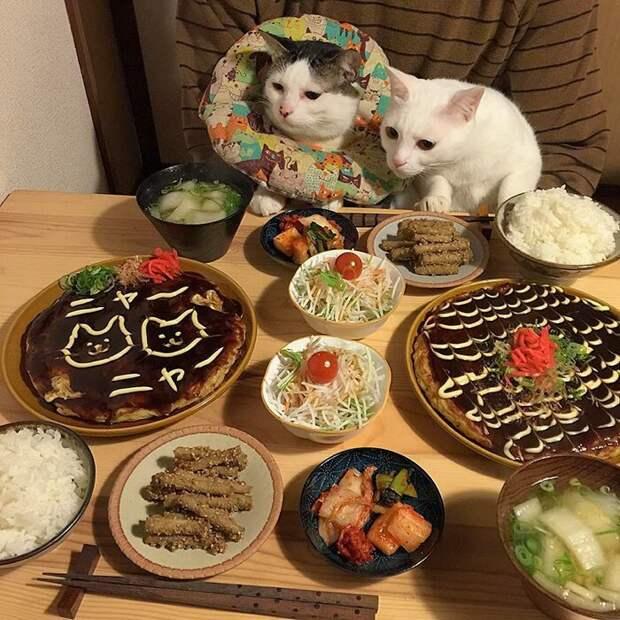 Сегодня сладкий стол и меня это несколько напрягает дегустация, еда, животные, кот, коты, позитив, реакция, юмор