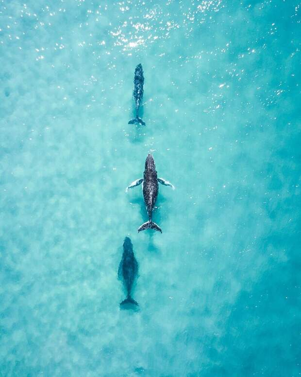 Завораживающая вода: 50 лучших работ фотоконкурса Agora #Water2020