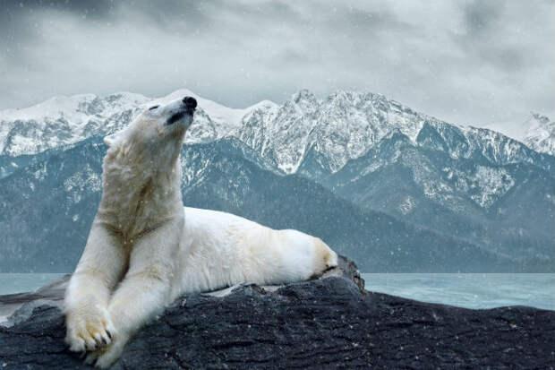 Самые опасные животные, которые водятся на территории России