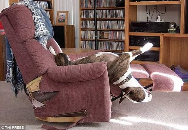 Собачья йога животные, мило, собаки, фото