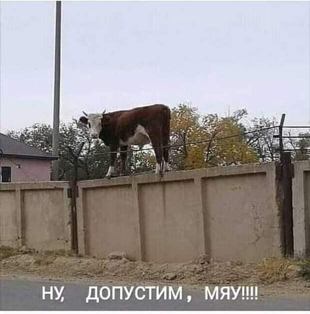 После выступления Жириновского к нему подходит мужик...