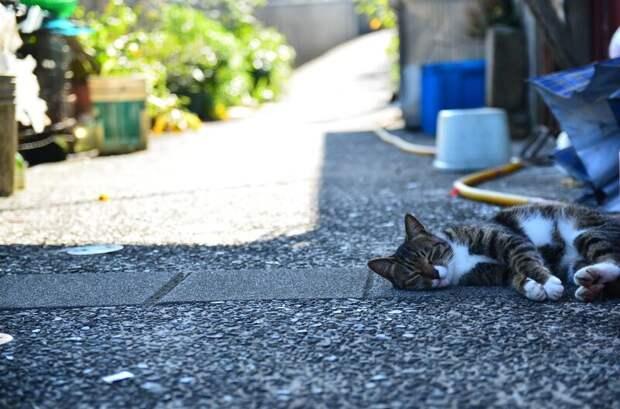 Осторожно: пост повышенной хвостатости! город, домашние животные, кот, кошка, уличные кошки, четвероногие любимцы, эстетика