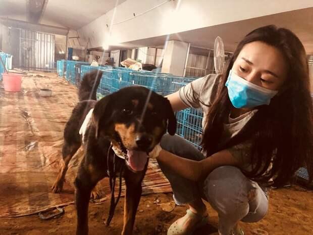 В Китае собак ловят на улицах и подают на стол - но эти, но этих 200 удалось спасти