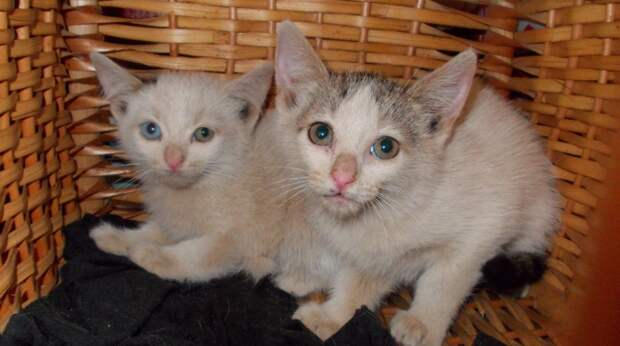 Два котёнка неизвестно как очутились на стройке. Добрый мужчина решил спасти их, но сперва их надо было поймать