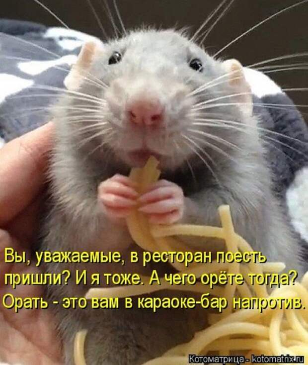 4953664_126340784_kotomatritsa_NA (591x700, 264Kb)