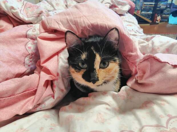 Еще недавно кошка была домашней, а потом очутилась на улице и сразу встретила свою судьбу