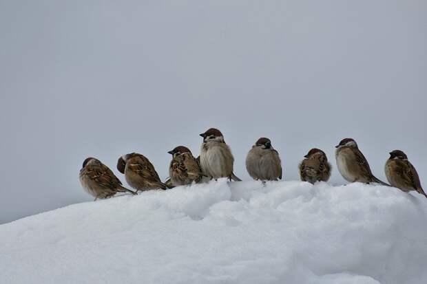 Помощь зимой: орнитологи Удмуртии рассказали, чем можно подкармливать птиц