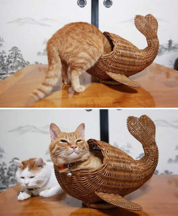 Теперь понятно, для чего эта штука животные, забавно, котопост, коты, кошки, неожиданно, питомцы, юмор