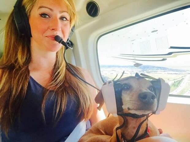 21. ...слишком забавны животные, пассажир, салон, самолет, собака, фотография