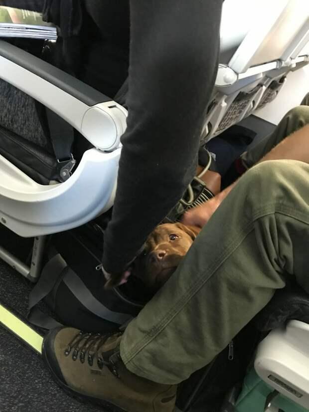 5. Занимают свободное пространство для ног животные, пассажир, салон, самолет, собака, фотография