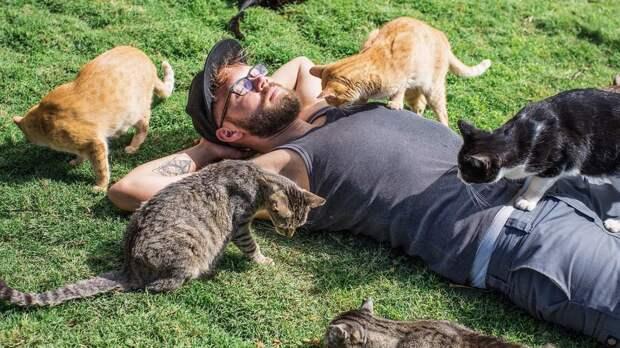Самые дружелюбные породы кошек определены экспертами