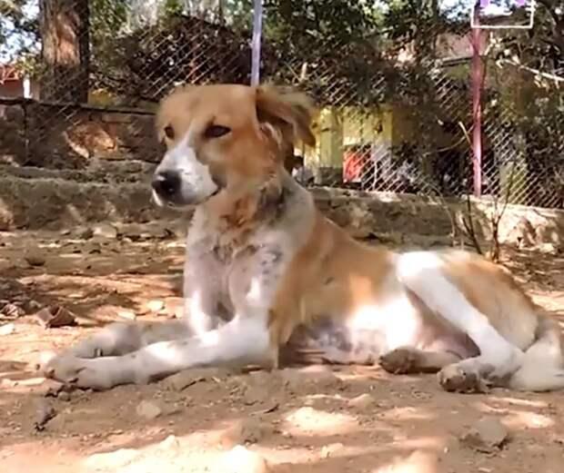 Бездомная собака застряла в бочке со смолой, несколько часов волонтеры спасали ее