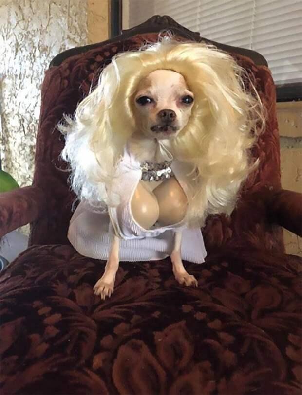 Собака с костюме