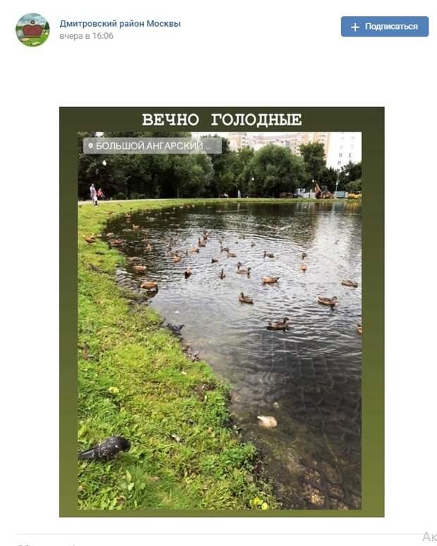 Фото дня: вечно голодные утки на Ангарских прудах