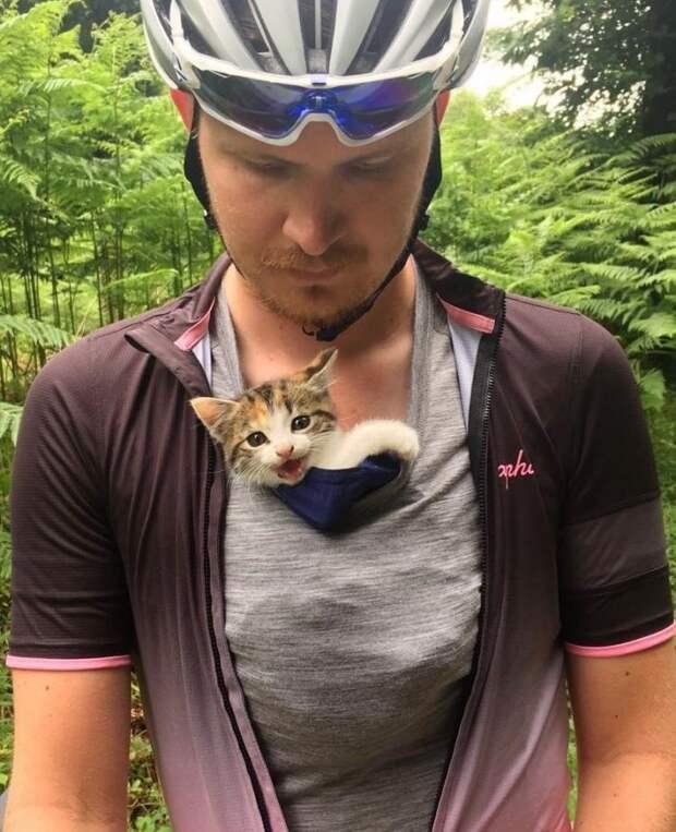 Одинокий котенок изо всех сил цеплялся за велосипедистов, чтобы те не уехали без него