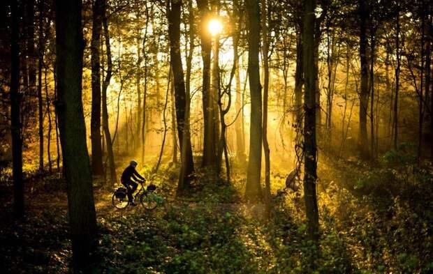 Рассвет в лесу