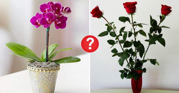 Какие цветы можно дарить, а какие – ни в коем случае